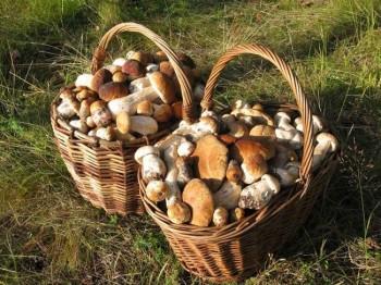 По грибы - транспортом MHD