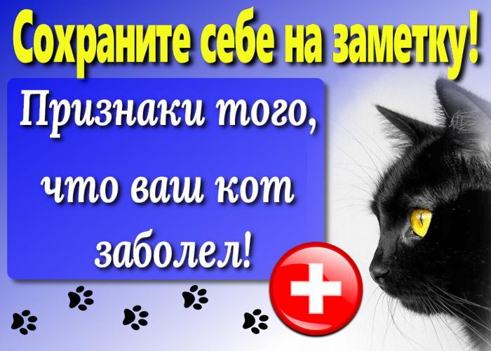 Как понять, что кот заболел
